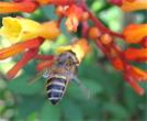ухапване от насекоми