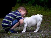 куче-дете