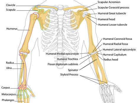 Заболявания на костите