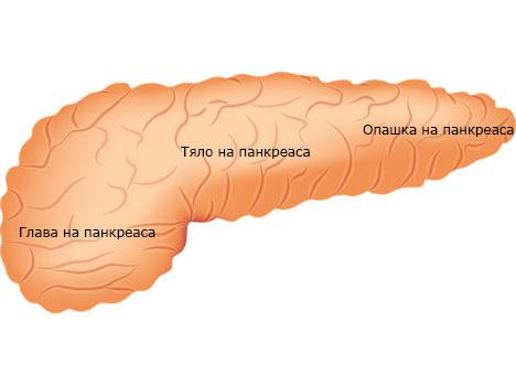 панкреас