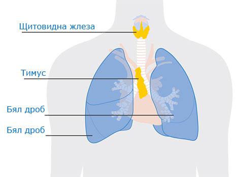 Лимфоидни органи