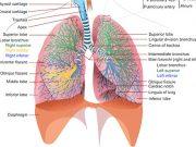 болести на диафрагмата