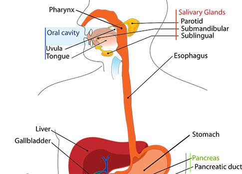 заболявания на хранопровода