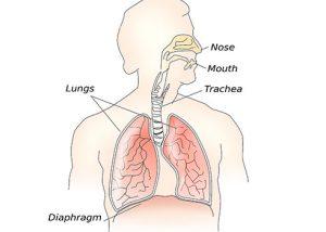 лупус еритематозус засяга белите дробове