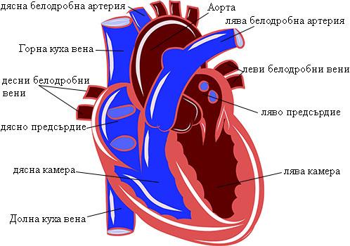 видове сърдечна недостатъчност