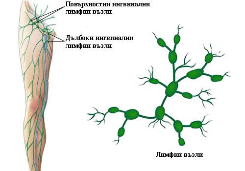 увеличени ингвинални лимфни възли
