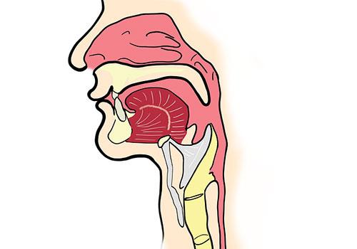 епиглотит