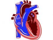 хипертиреоидизъм и сърдечни прояви