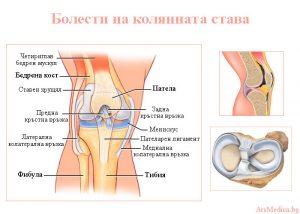 болести на колянната става