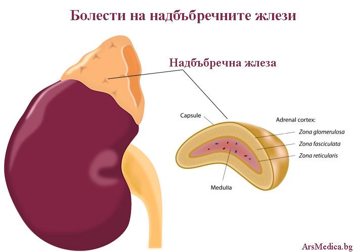 болести на надбъбречните жлези