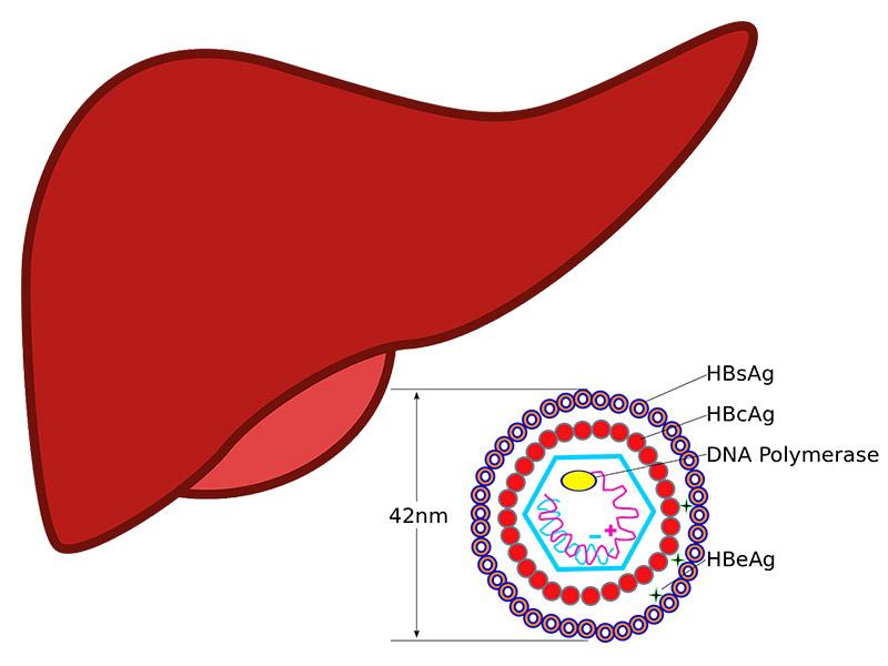 симптоми на хепатит В